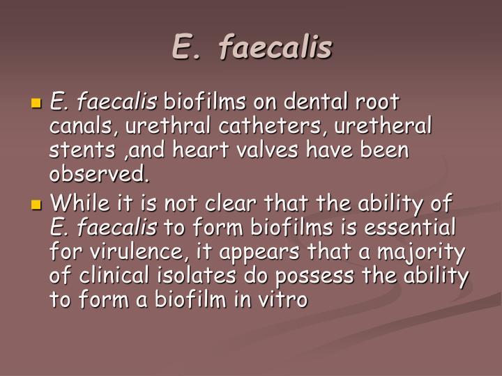 E. faecalis