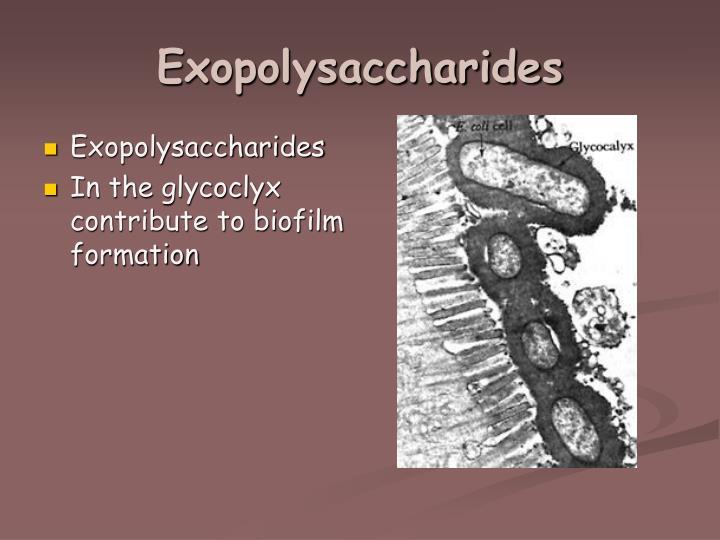Exopolysaccharides