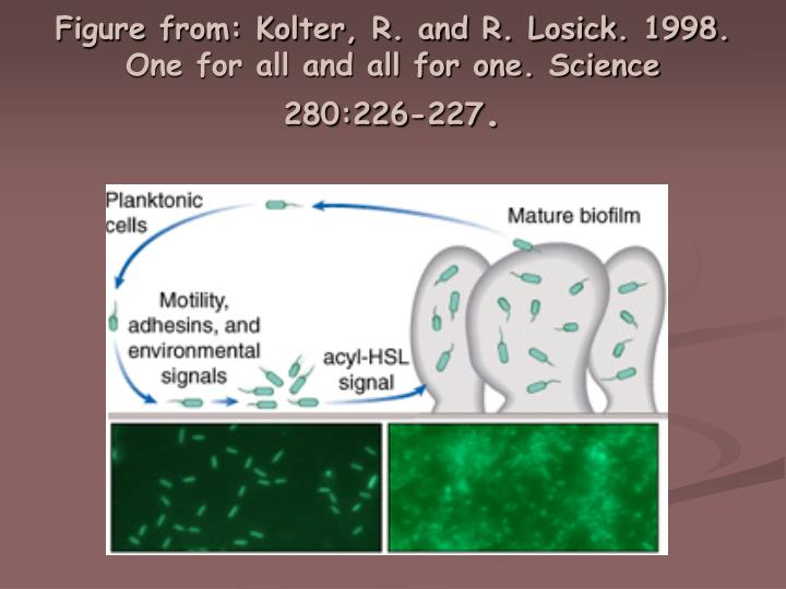 Figure from: Kolter, R. and R. Losick. 1998. One for all and all for one. Science 280:226-227