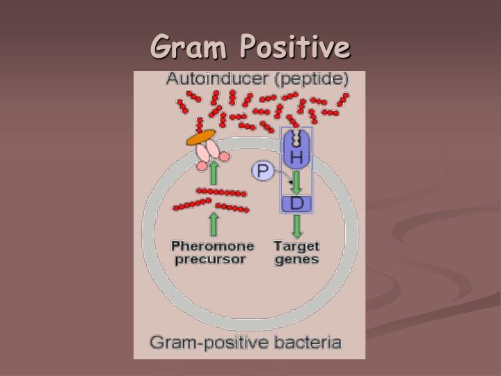 Gram Positive