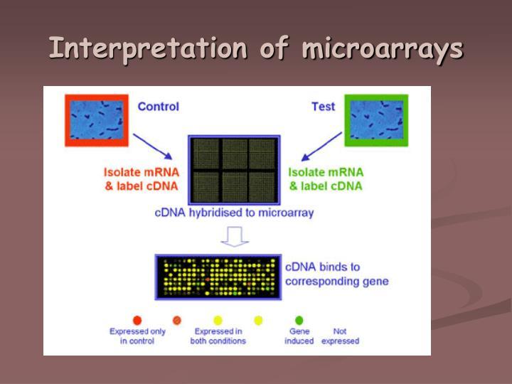 Interpretation of microarrays