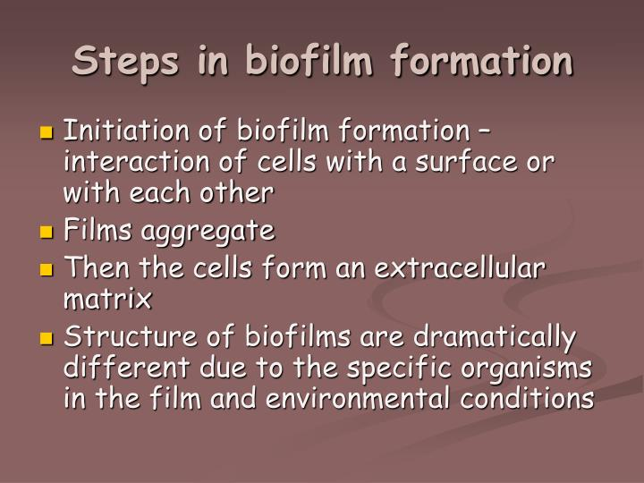 Steps in biofilm formation