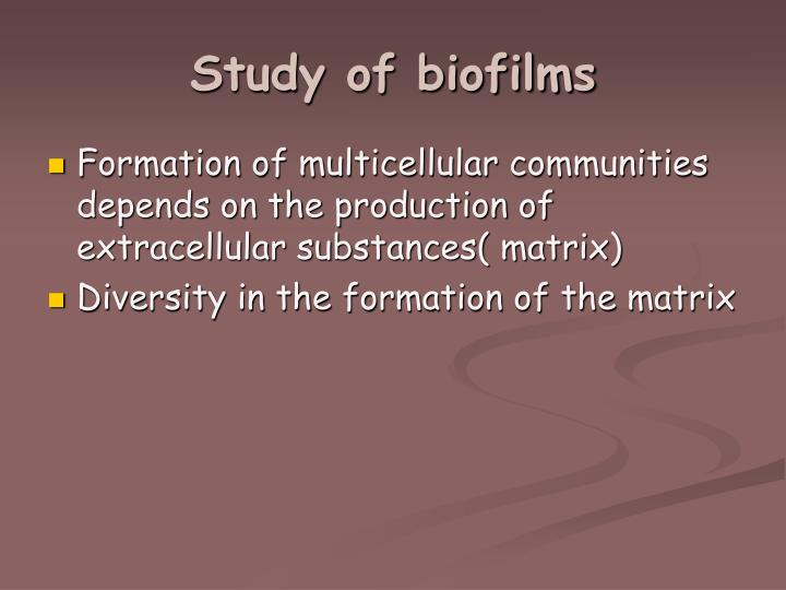 Study of biofilms