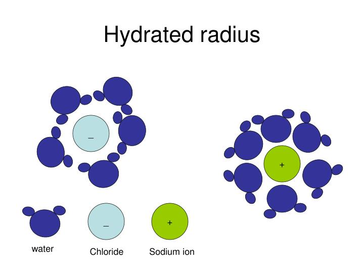 Hydrated radius