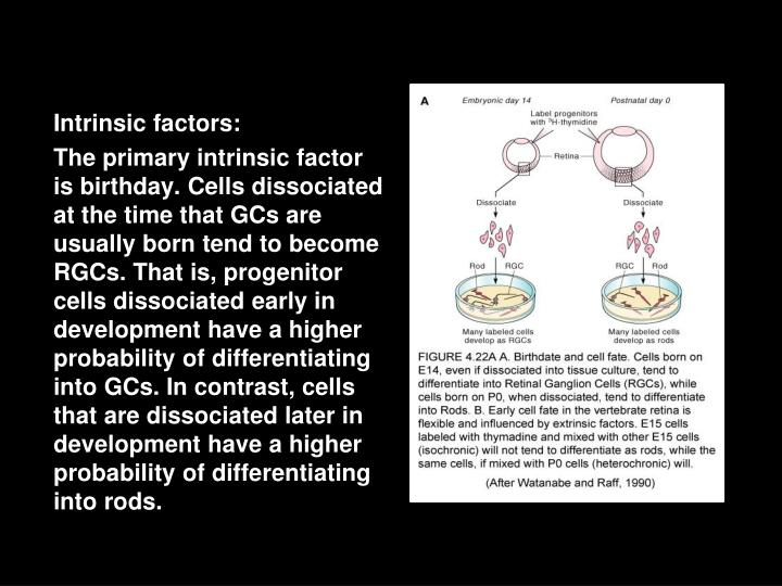 Intrinsic factors: