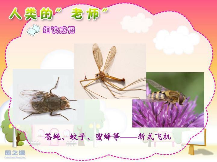 苍蝇、蚊子、蜜蜂等