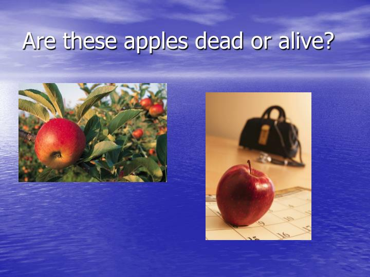 Are these apples dead or alive