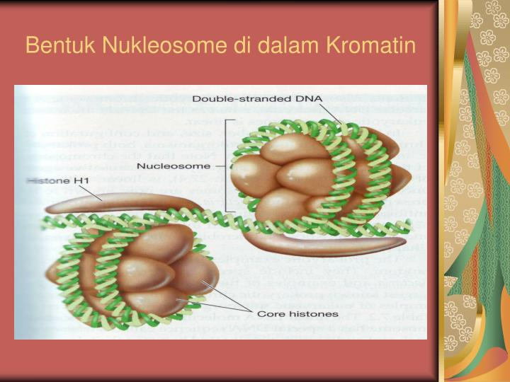 Bentuk Nukleosome di dalam Kromatin