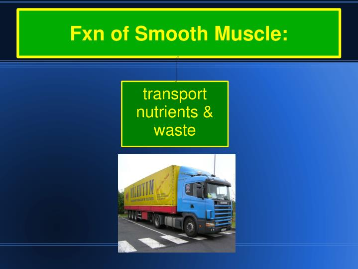 Fxn of Smooth Muscle: