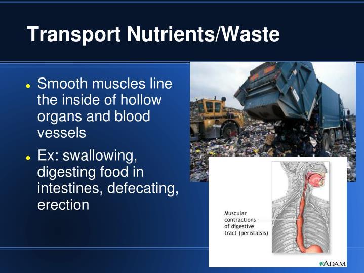 Transport Nutrients/Waste
