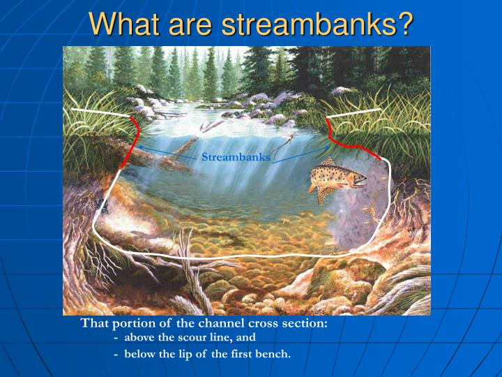 What are streambanks?