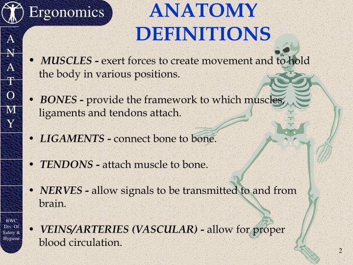 Anatomy definitions