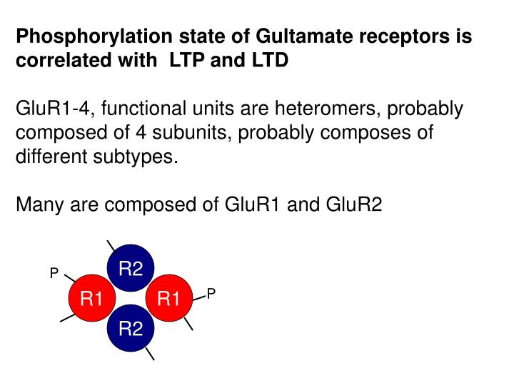 Phosphorylation state of Gultamate receptors is correlated with  LTP and LTD