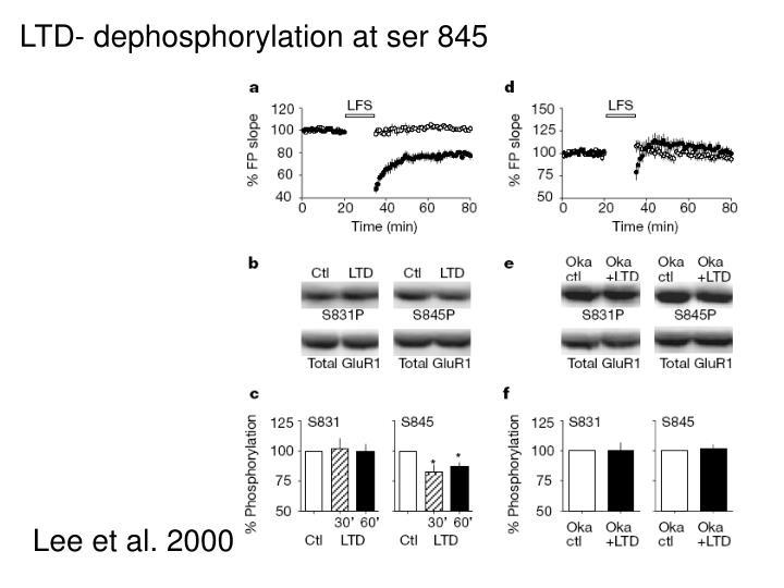 LTD- dephosphorylation at ser 845