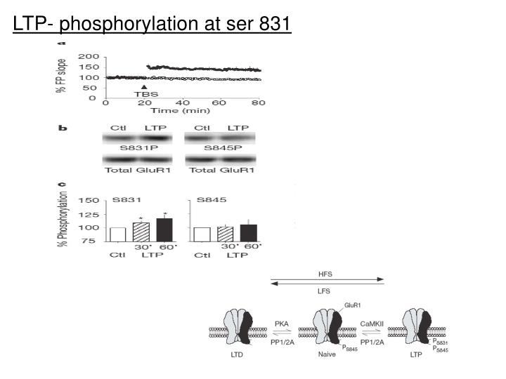 LTP- phosphorylation at ser 831