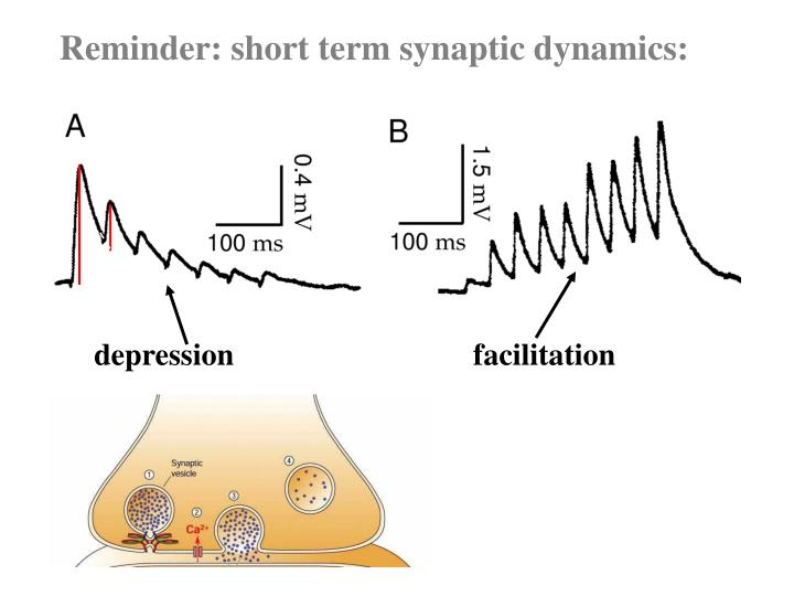 Reminder: short term synaptic dynamics: