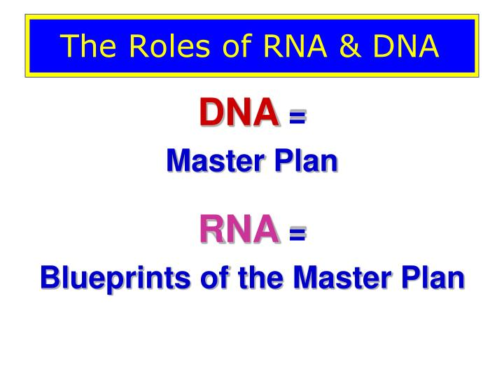 The Roles of RNA & DNA