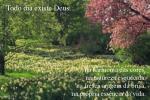 na harmonia das cores na natureza esquecida na fresca aragem da brisa na pr pria ess ncia da vida