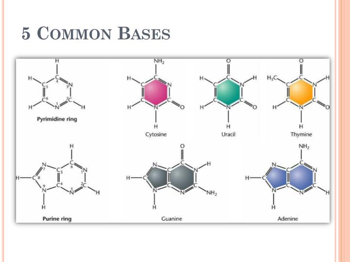 5 Common Bases