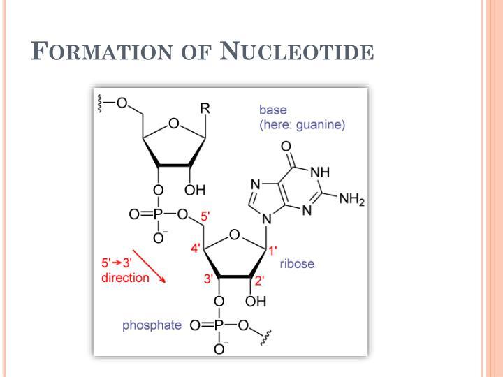 Formation of Nucleotide