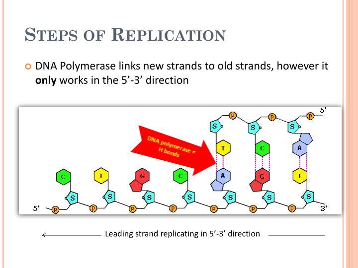 Steps of Replication