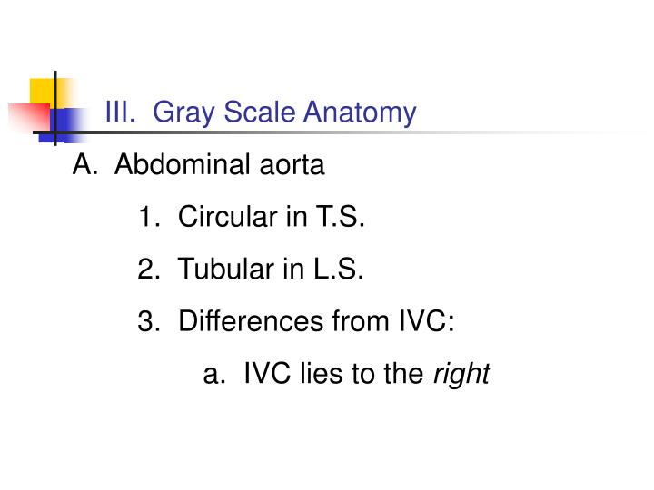 III.  Gray Scale Anatomy