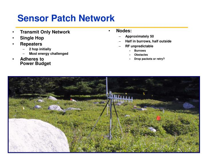 Sensor Patch Network