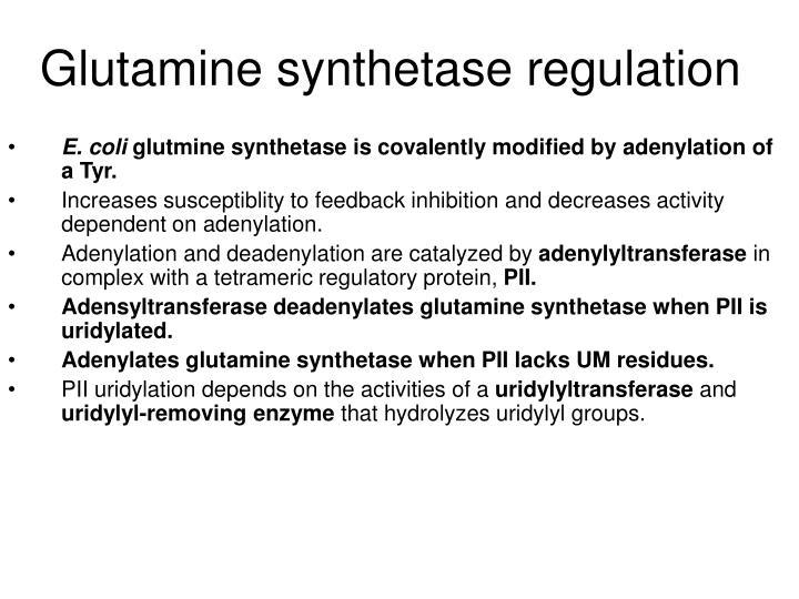 Glutamine synthetase regulation