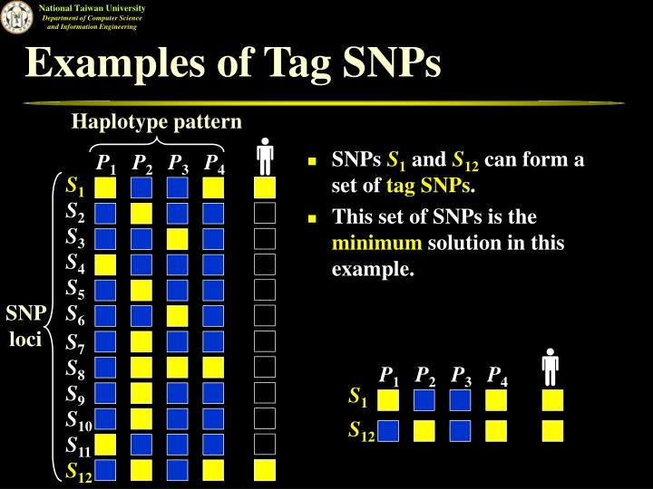 Examples of Tag SNPs