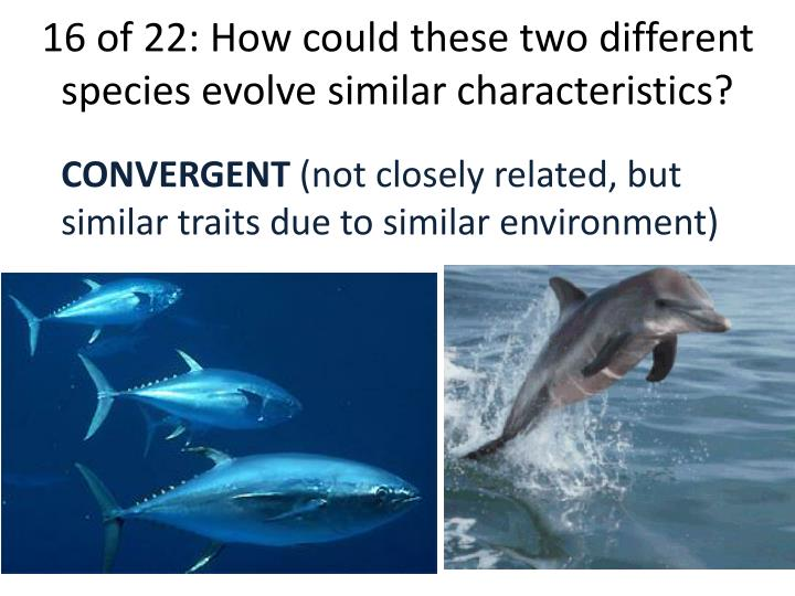 16 of 22: How could these two different species evolve similar characteristics?