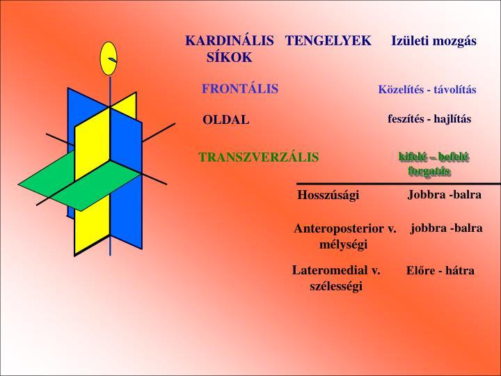 KARDINÁLIS