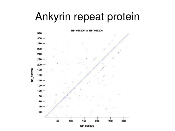 Ankyrin repeat protein