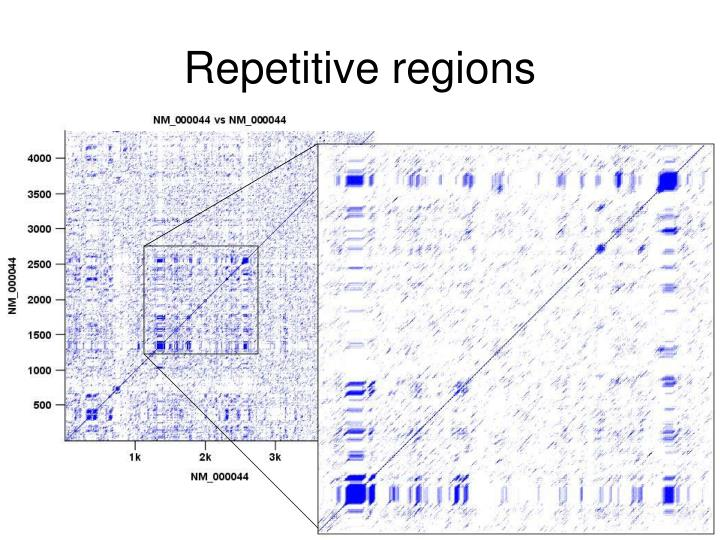 Repetitive regions