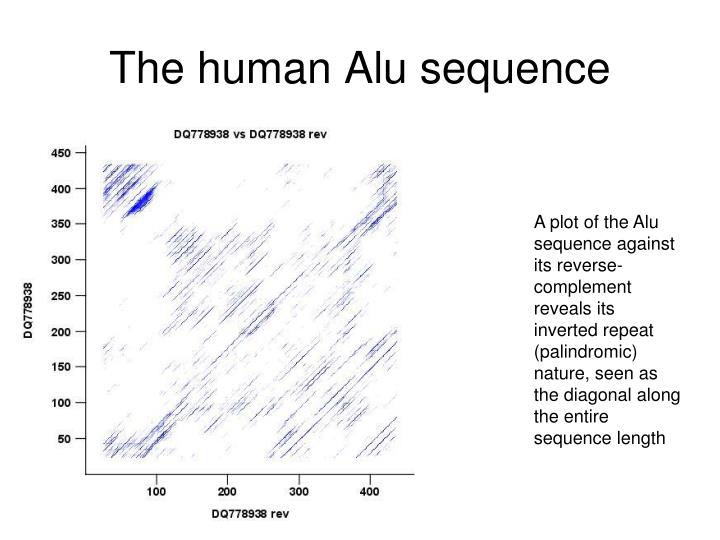 The human Alu sequence