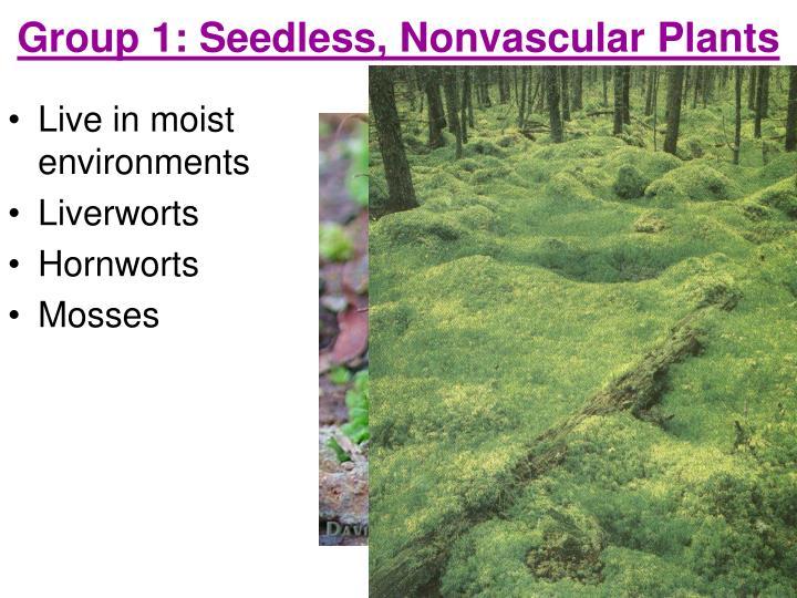 Group 1: Seedless, Nonvascular Plants
