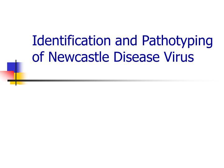 Identification and Pathotyping of Newcastle Disease Virus
