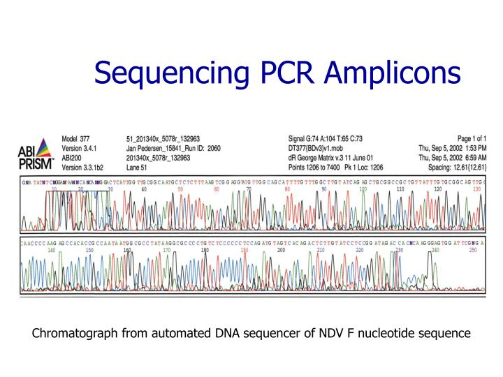 Sequencing PCR Amplicons
