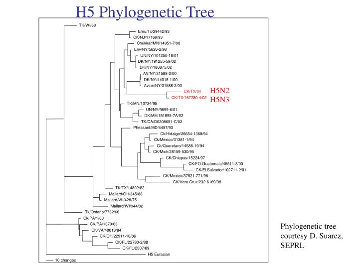 H5 Phylogenetic Tree