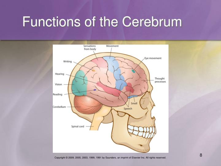 Functions of the Cerebrum