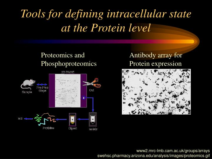 Tools for defining intracellular state at the Protein level