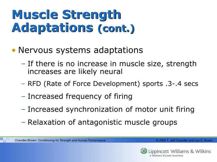 Muscle Strength Adaptations