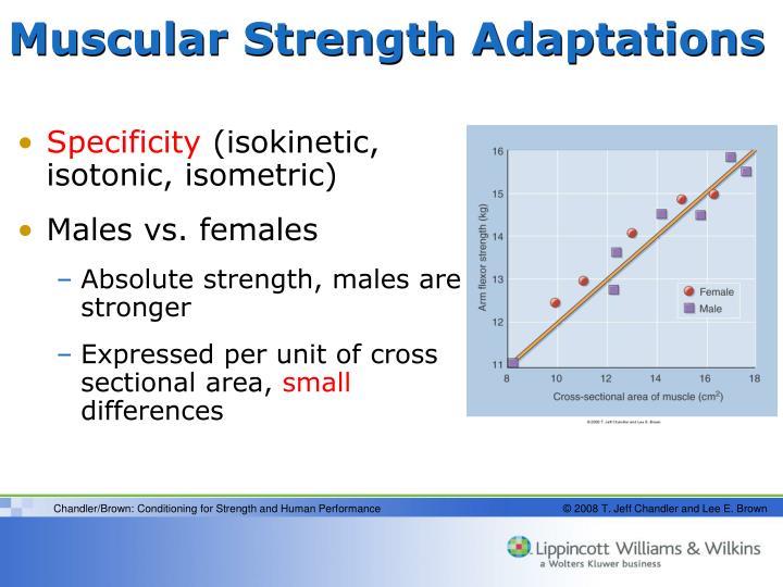 Muscular Strength Adaptations