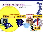 from gene to protein1