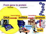 from gene to protein2