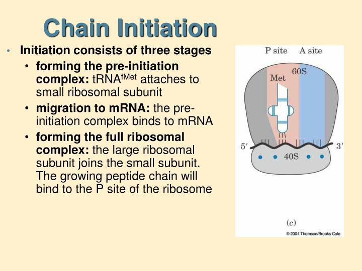 Chain Initiation