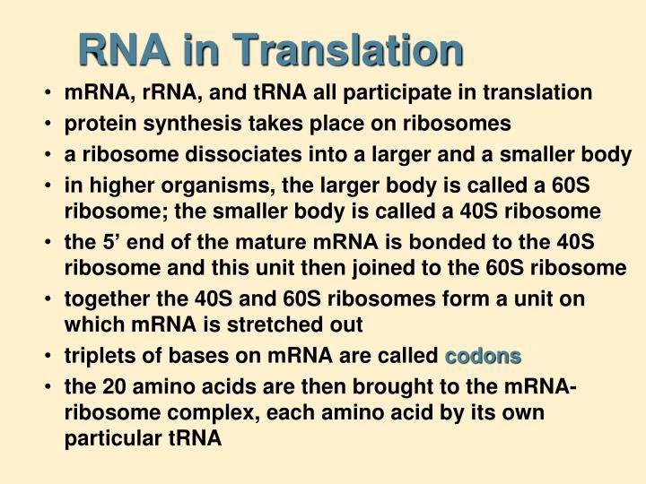 RNA in Translation