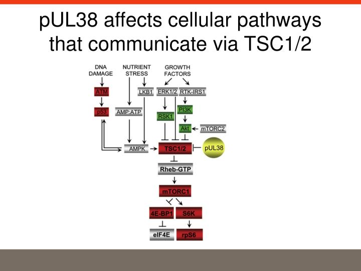 pUL38 affects cellular pathways that communicate via TSC1/2