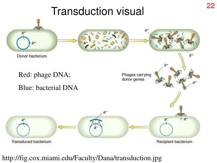 Transduction visual
