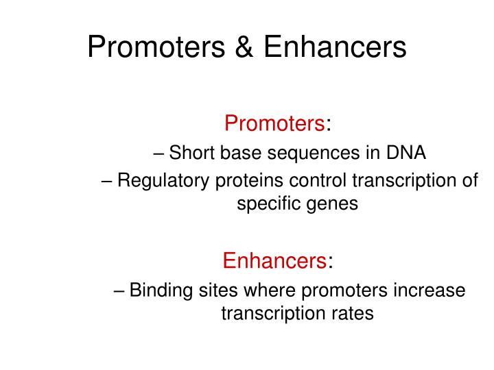 Promoters & Enhancers