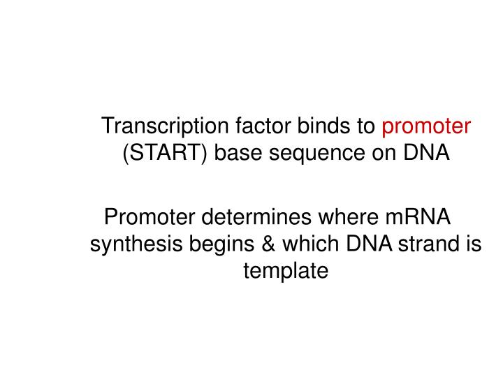 Transcription factor binds to